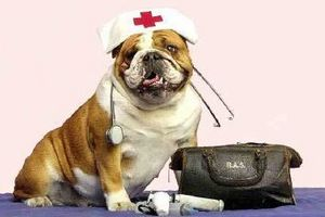 Allergy Season For You & Your Pet
