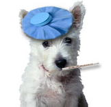 Flu Season for Dogs?